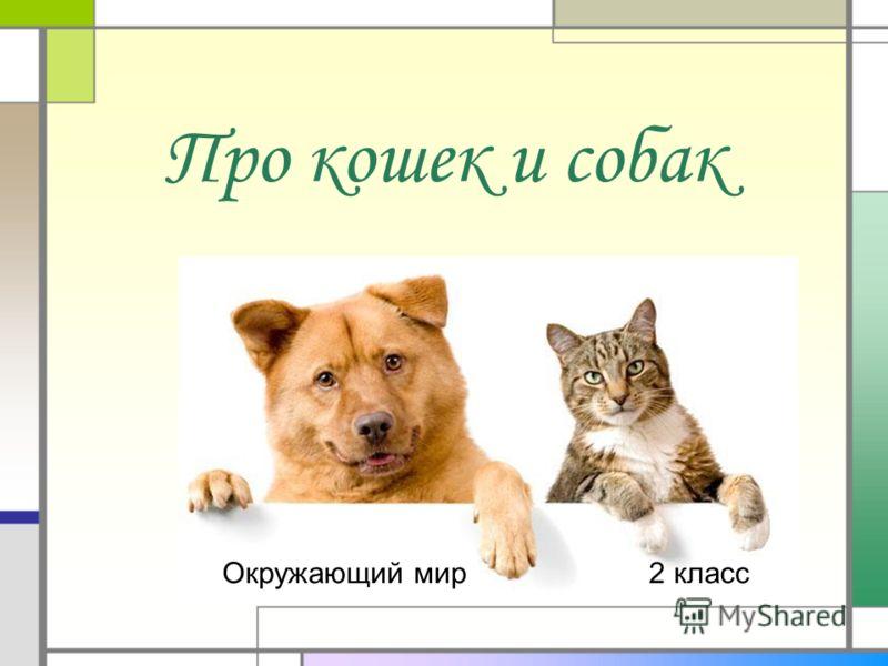 Про кошек и собак Окружающий мир2 класс
