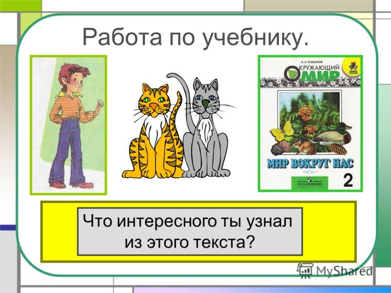 Работа по учебнику. Прочитай текст «Кошки» в учебнике на стр.80. Что интересного ты узнал из этого текста?