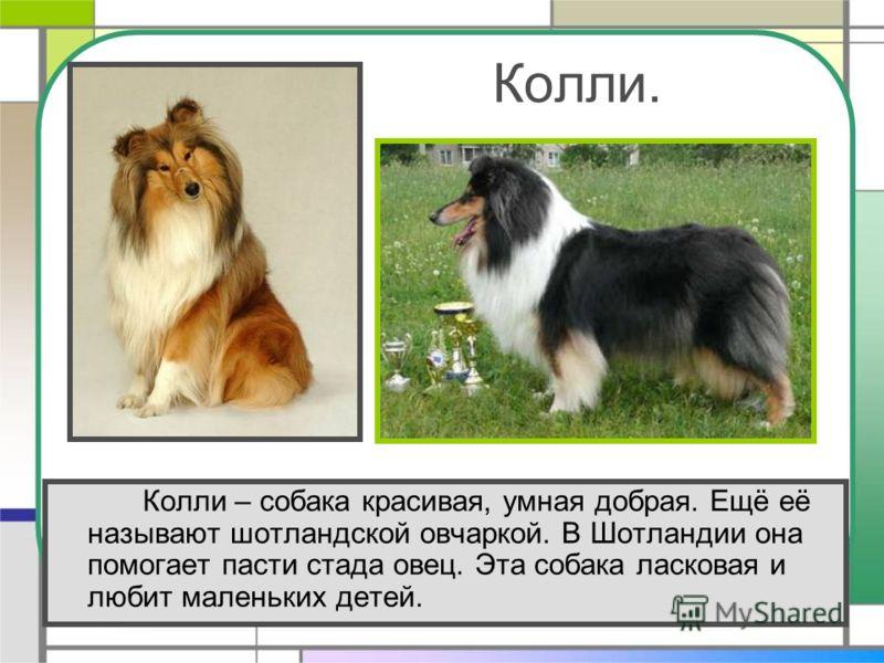 Красивая Презентация Про Животных
