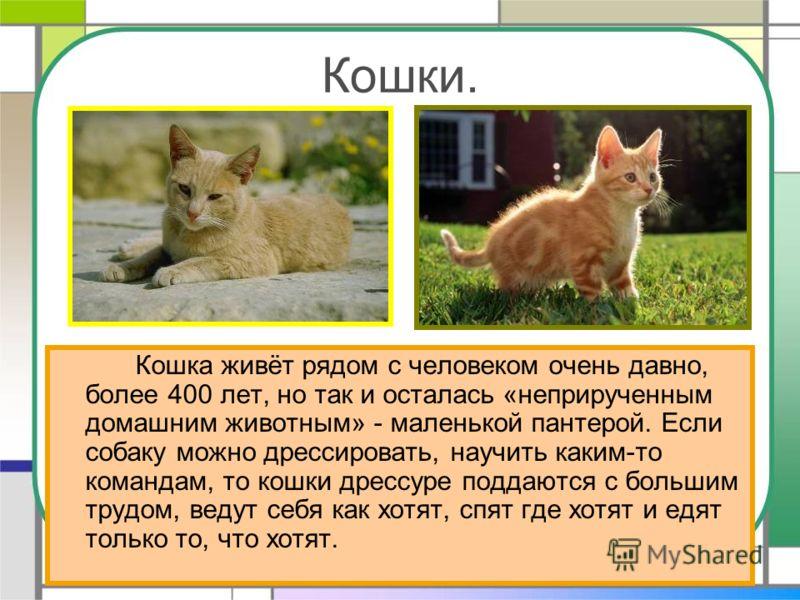 Кошки. Кошка живёт рядом с человеком очень давно, более 400 лет, но так и осталась «неприрученным домашним животным» - маленькой пантерой. Если собаку можно дрессировать, научить каким-то командам, то кошки дрессуре поддаются с большим трудом, ведут