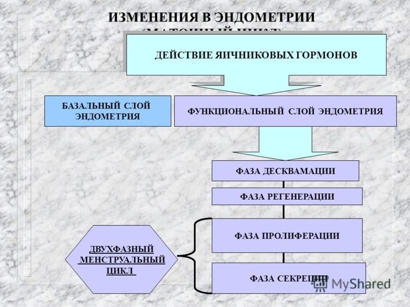 ИЗМЕНЕНИЯ В ЭНДОМЕТРИИ (МАТОЧНЫЙ ЦИКЛ) БАЗАЛЬНЫЙ СЛОЙ ЭНДОМЕТРИЯ ФУНКЦИОНАЛЬНЫЙ СЛОЙ ЭНДОМЕТРИЯ ФАЗА ДЕСКВАМАЦИИ ФАЗА РЕГЕНЕРАЦИИ ФАЗА ПРОЛИФЕРАЦИИ ФАЗА СЕКРЕЦИИ ДВУХФАЗНЫЙ МЕНСТРУАЛЬНЫЙ ЦИКЛ ДЕЙСТВИЕ ЯИЧНИКОВЫХ ГОРМОНОВ