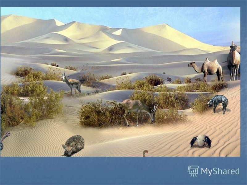 Полупустыни - это зона смешения степных и пустынных животных. В пустынях обитают перевязка, барханная кошка, ушастый ёж, песчанки, жёлтый суслик, тушканчики, змеи, ящерицы, агама, саджа. Из птиц в пустынях обитают жаворонки, коньки, зуйки, дрофа-крас