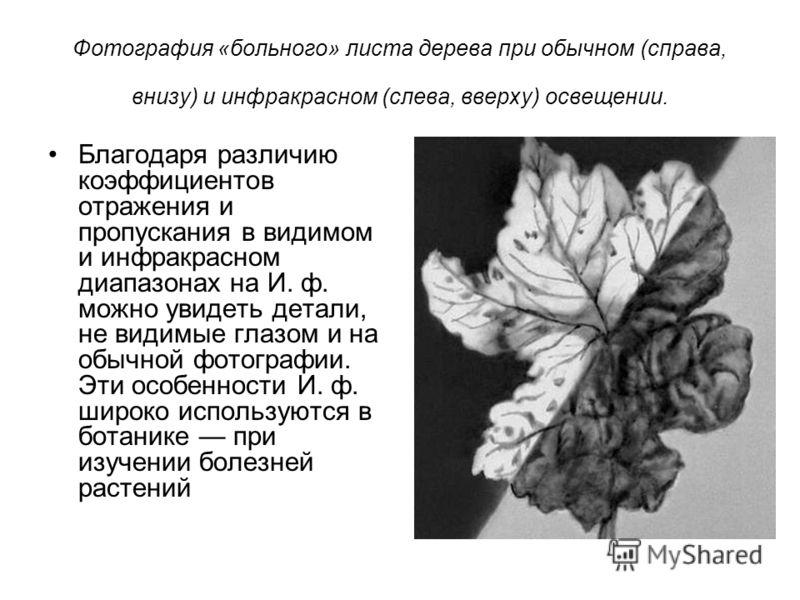 Фотография «больного» листа дерева при обычном (справа, внизу) и инфракрасном (слева, вверху) освещении. Благодаря различию коэффициентов отражения и пропускания в видимом и инфракрасном диапазонах на И. ф. можно увидеть детали, не видимые глазом и н