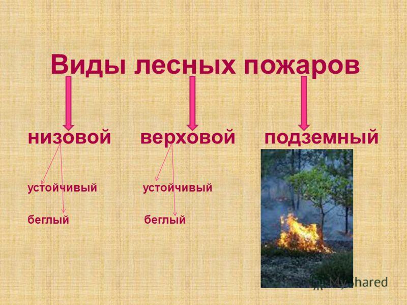 Виды лесных пожаров низовой верховой подземный устойчивый беглый