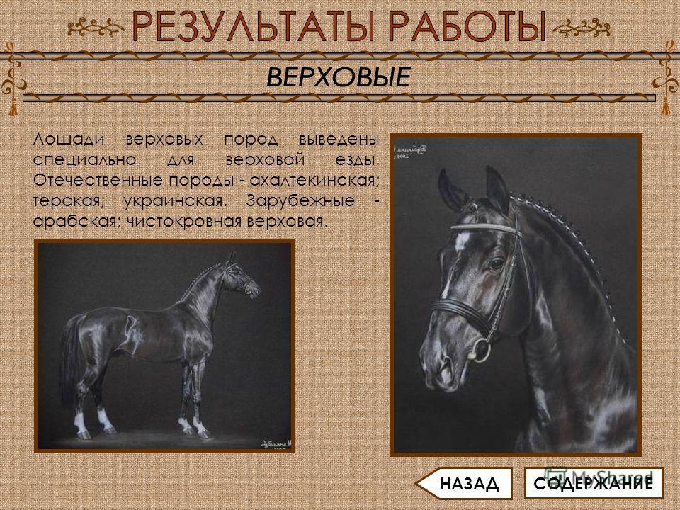 Лошади верховых пород выведены специально для верховой езды. Отечественные породы - ахалтекинская; терская; украинская. Зарубежные - арабская; чистокровная верховая. СОДЕРЖАНИЕ НАЗАД