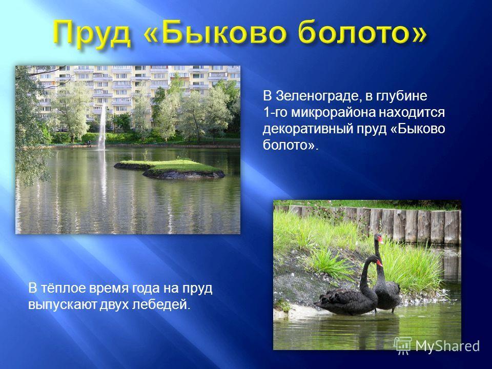 В Зеленограде, в глубине 1- го микрорайона находится декоративный пруд « Быково болото ». В тёплое время года на пруд выпускают двух лебедей.