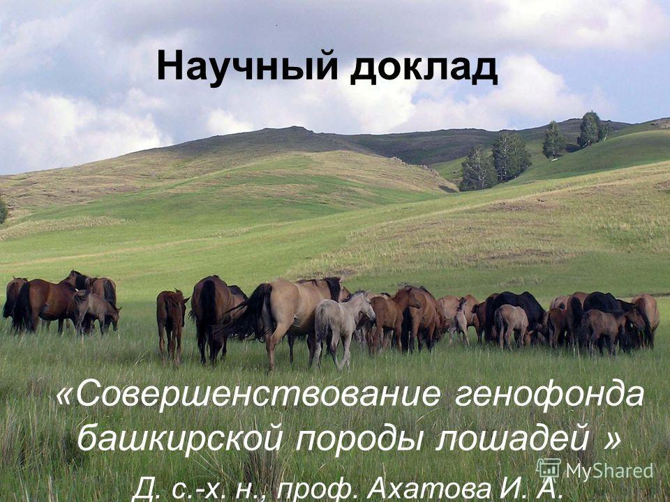1 Научный доклад «Совершенствование генофонда башкирской породы лошадей » Д. с.-х. н., проф. Ахатова И. А.