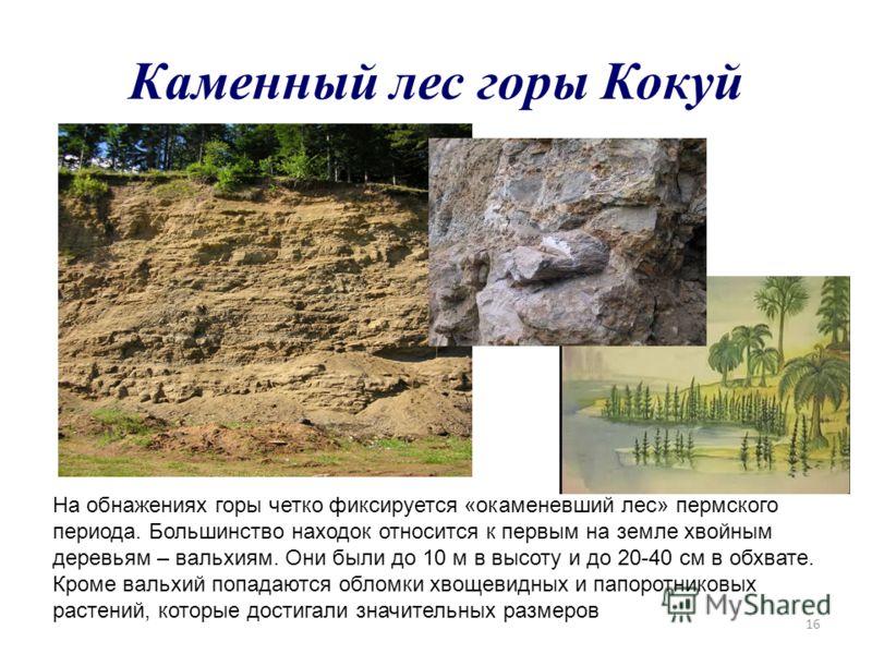 16 Каменный лес горы Кокуй На обнажениях горы четко фиксируется «окаменевший лес» пермского периода. Большинство находок относится к первым на земле хвойным деревьям – вальхиям. Они были до 10 м в высоту и до 20-40 см в обхвате. Кроме вальхий попадаю