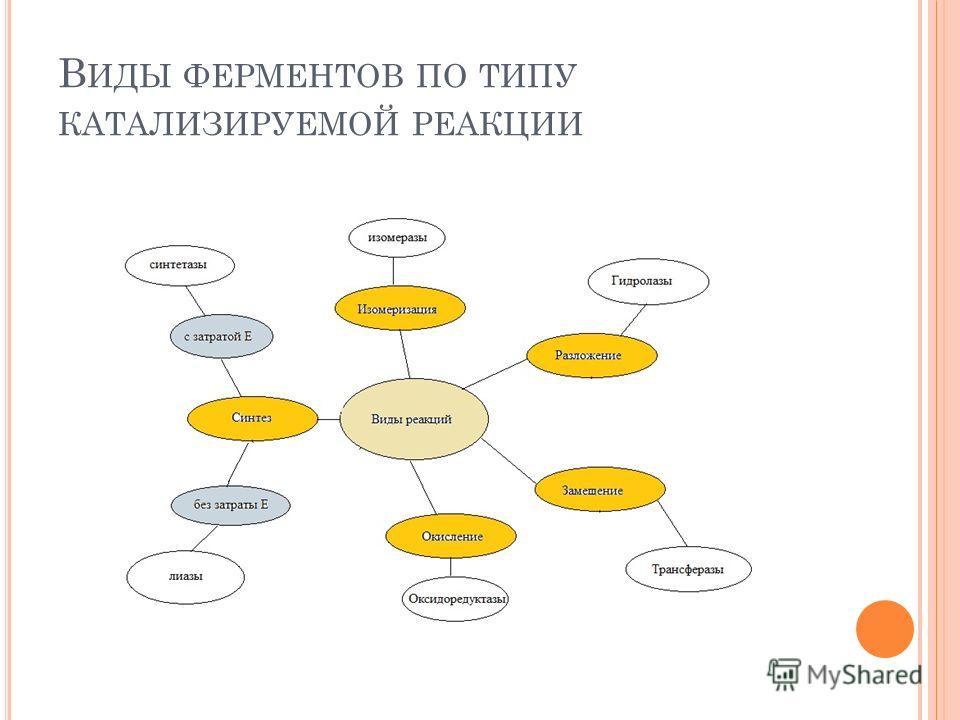 В ИДЫ ФЕРМЕНТОВ ПО ТИПУ КАТАЛИЗИРУЕМОЙ РЕАКЦИИ
