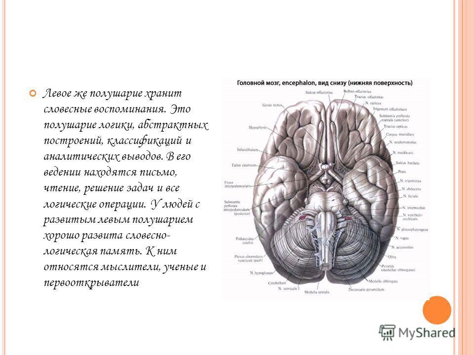 Левое же полушарие хранит словесные воспоминания. Это полушарие логики, абстрактных построений, классификаций и аналитических выводов. В его ведении находятся письмо, чтение, решение задач и все логические операции. У людей с развитым левым полушарие