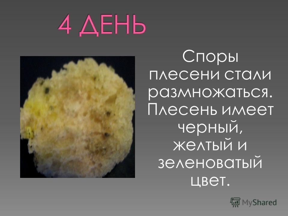 Споры плесени стали размножаться. Плесень имеет черный, желтый и зеленоватый цвет.