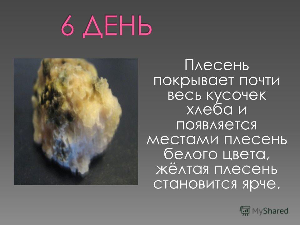 Плесень покрывает почти весь кусочек хлеба и появляется местами плесень белого цвета, жёлтая плесень становится ярче.
