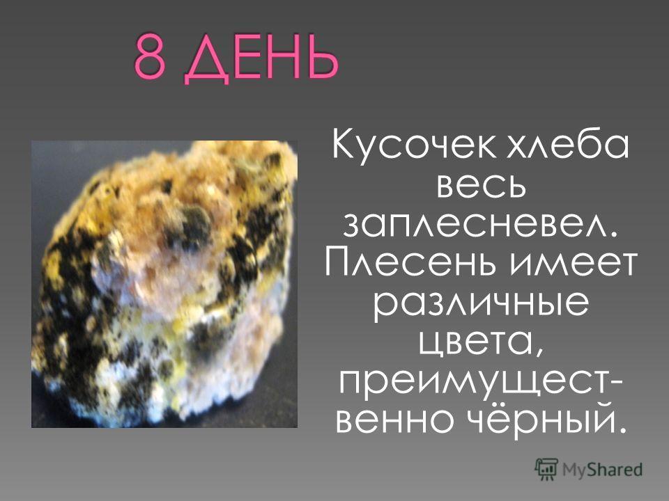 Кусочек хлеба весь заплесневел. Плесень имеет различные цвета, преимущест- венно чёрный.