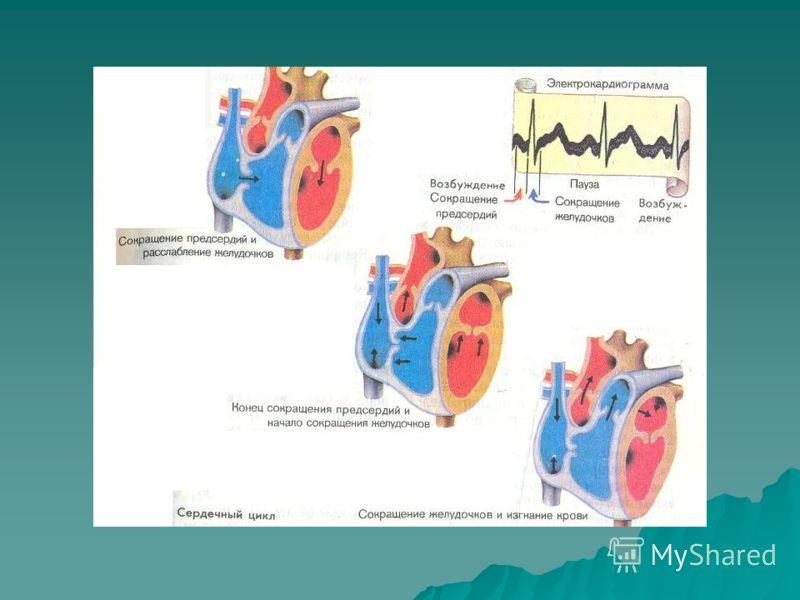 Сердечный цикл Сердечный цикл