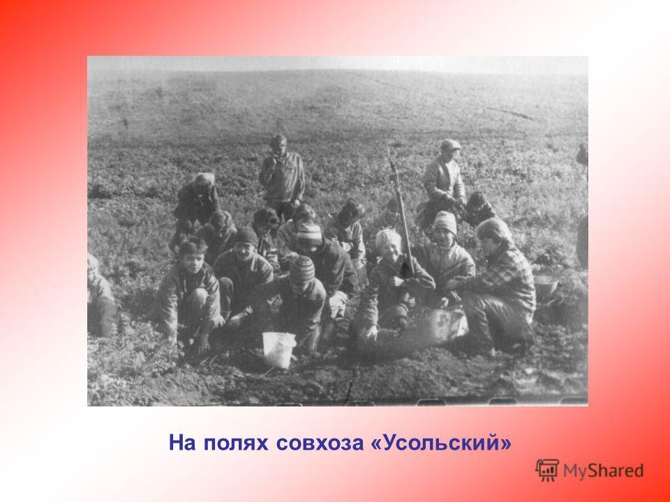 На полях совхоза «Усольский»