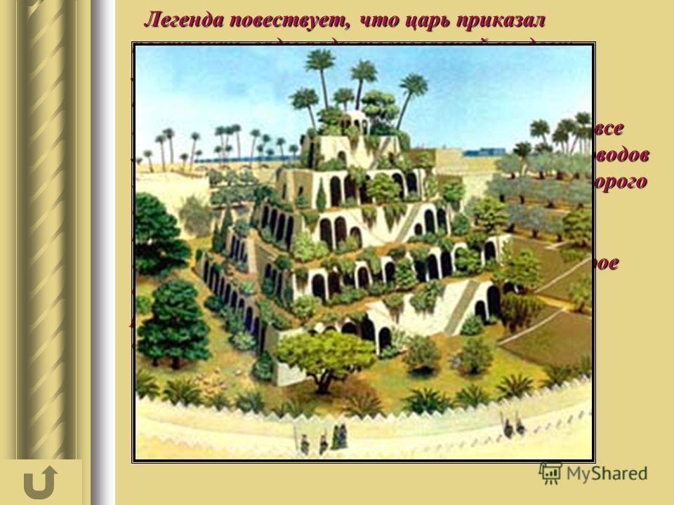 Легенда повествует, что царь приказал построить сады ради тосковавшей по дому молодой жены Амитис, надеясь, что они напомнят ей родные персидские горы. Навуходоносор распорядился посадить в саду все мыслимые виды деревьев и цветов. Успех садоводов за