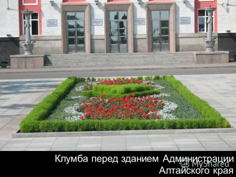 Клумба перед зданием Администрации Алтайского края
