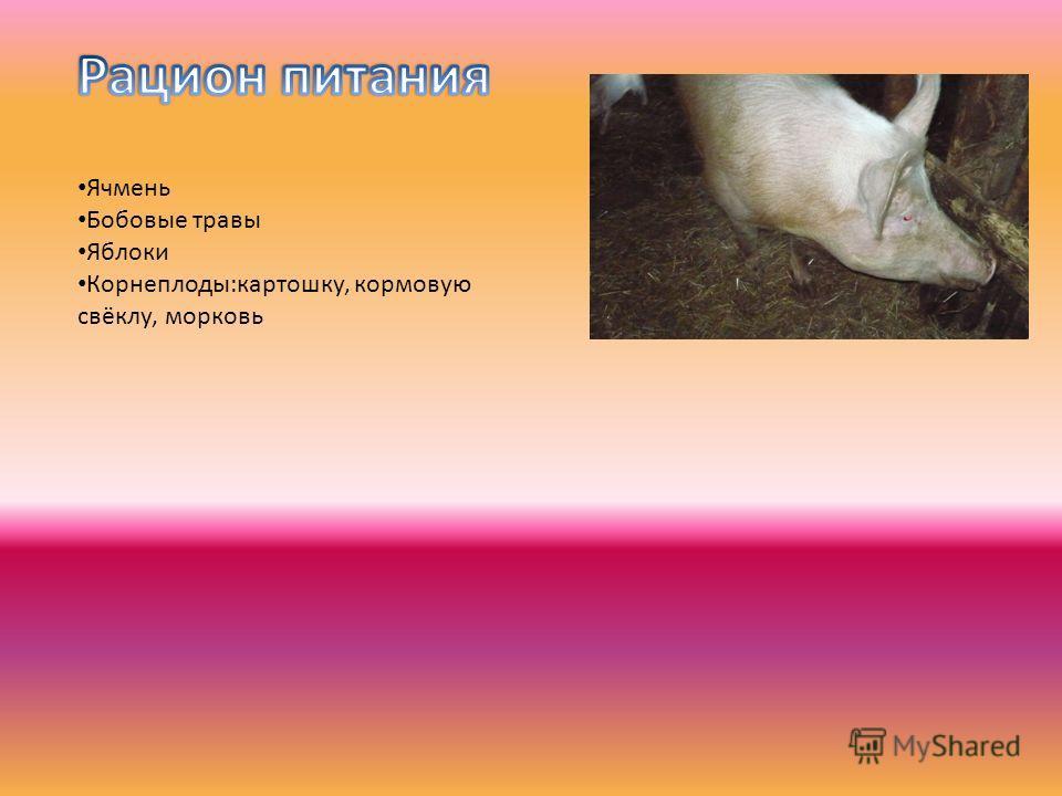 Ячмень Бобовые травы Яблоки Корнеплоды:картошку, кормовую свёклу, морковь