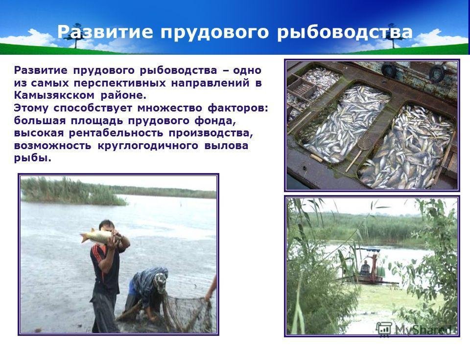 www.themegallery.com Company Logo Развитие прудового рыбоводства Развитие прудового рыбоводства – одно из самых перспективных направлений в Камызякском районе. Этому способствует множество факторов: большая площадь прудового фонда, высокая рентабельн
