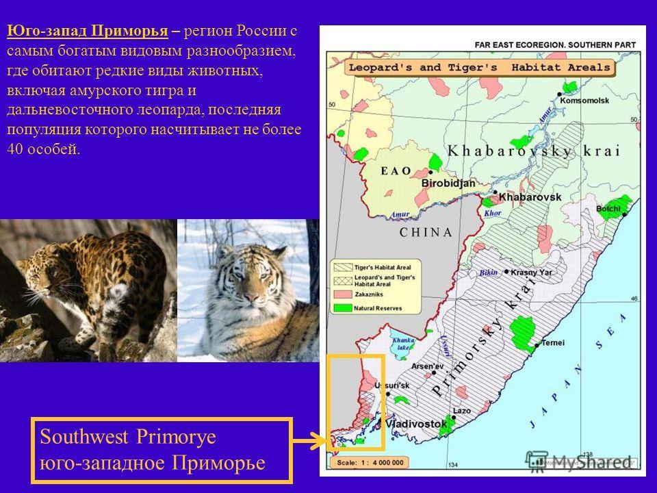 Southwest Primorye юго-западное Приморье Юго-запад Приморья – регион России с самым богатым видовым разнообразием, где обитают редкие виды животных, включая амурского тигра и дальневосточного леопарда, последняя популяция которого насчитывает не боле