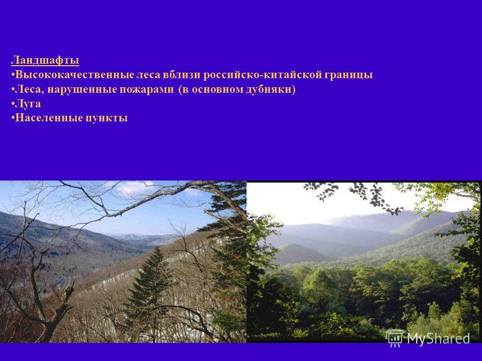 Ландшафты Высококачественные леса вблизи российско-китайской границы Леса, нарушенные пожарами (в основном дубняки) Луга Населенные пункты