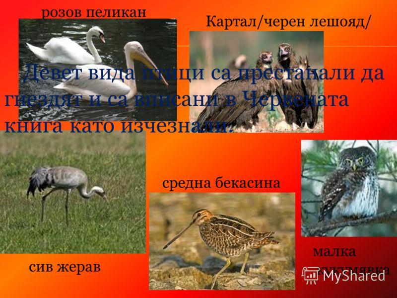 розов пеликан Картал/черен лешояд/ сив жерав средна бекасина малка кукумявка Девет вида птици са престанали да гнездят и са вписани в Червената книга като изчезнали.