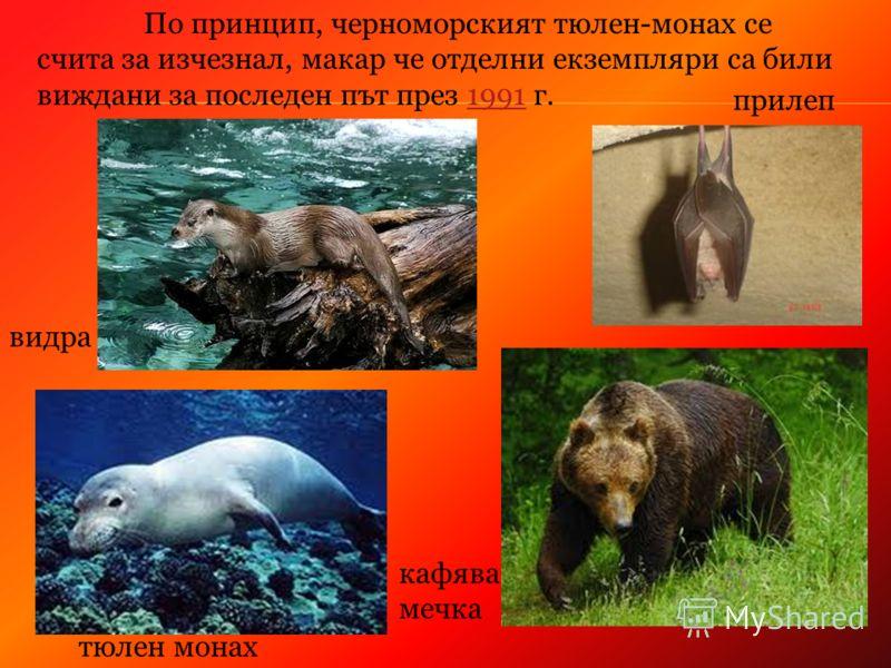 тюлен монах кафява мечка видра прилеп По принцип, черноморският тюлен-монах се счита за изчезнал, макар че отделни екземпляри са били виждани за последен път през 1991 г.1991