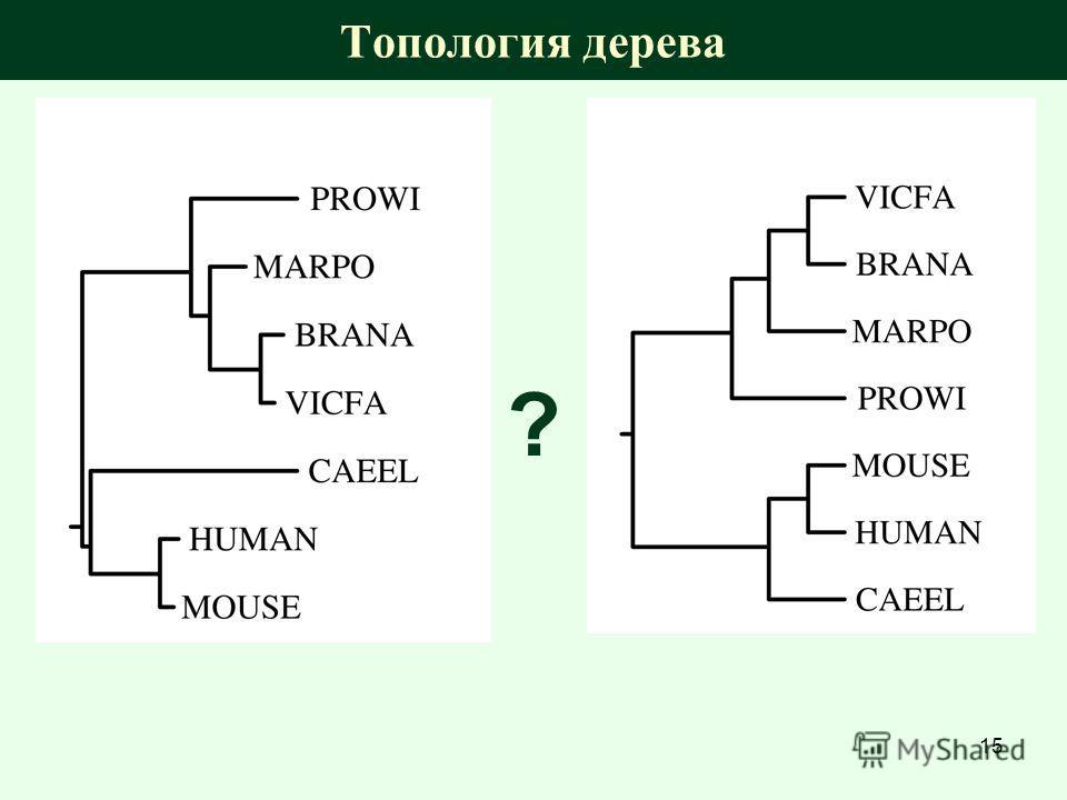 Топология дерева ? 15