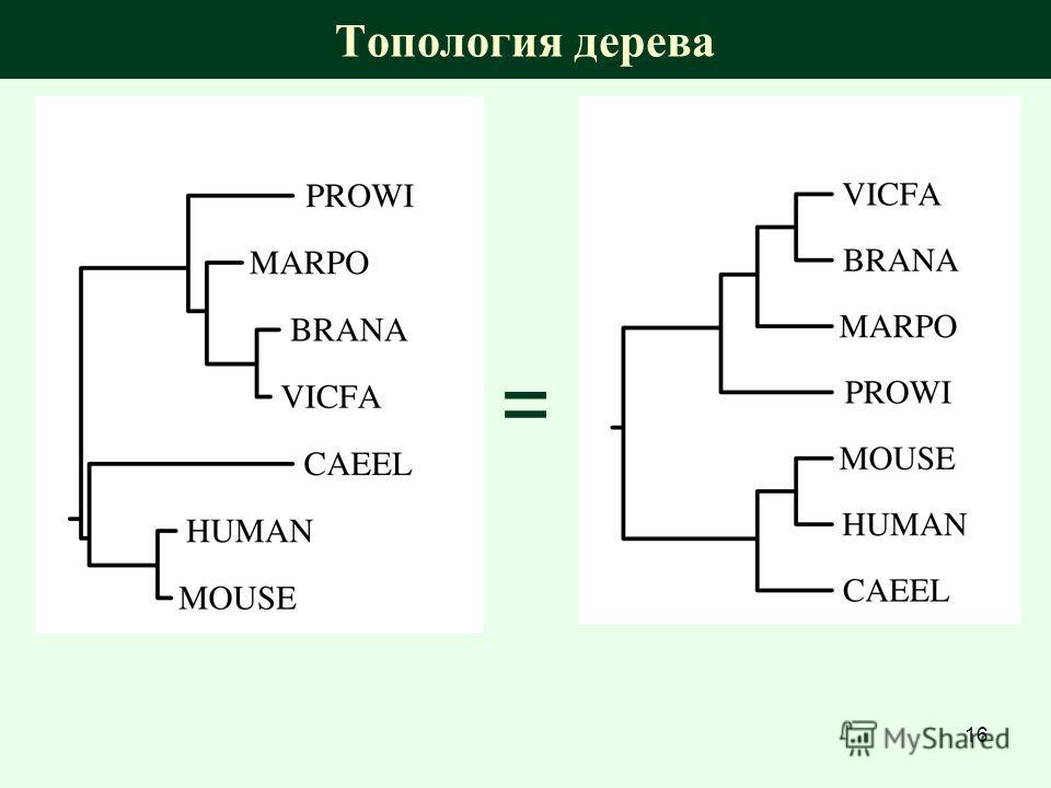 Топология дерева = 16