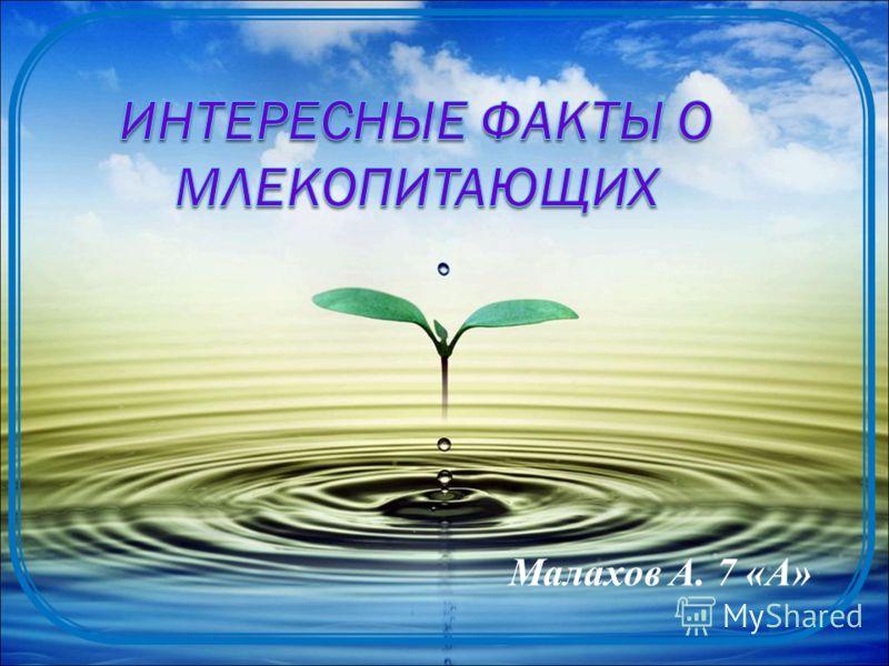 Малахов А. 7 «А»