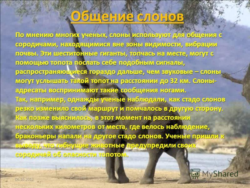 Общение слонов 20.07.20125 По мнению многих ученых, слоны используют для общения с сородичами, находящимися вне зоны видимости, вибрации почвы. Эти шеститонные гиганты, топчась на месте, могут с помощью топота послать себе подобным сигналы, распростр