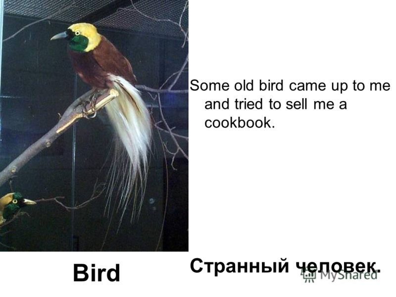 Some old bird came up to me and tried to sell me a cookbook. Странный человек. Bird