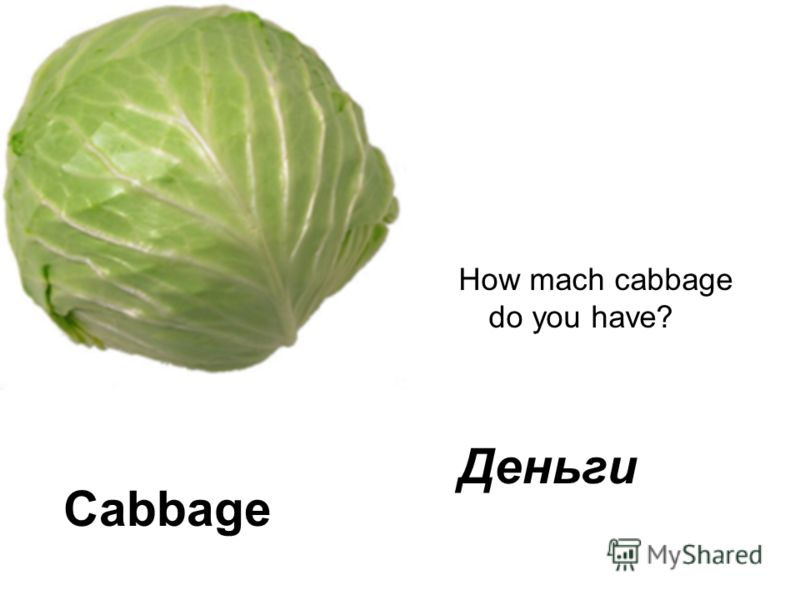 Cabbage How mach cabbage do you have? Деньги