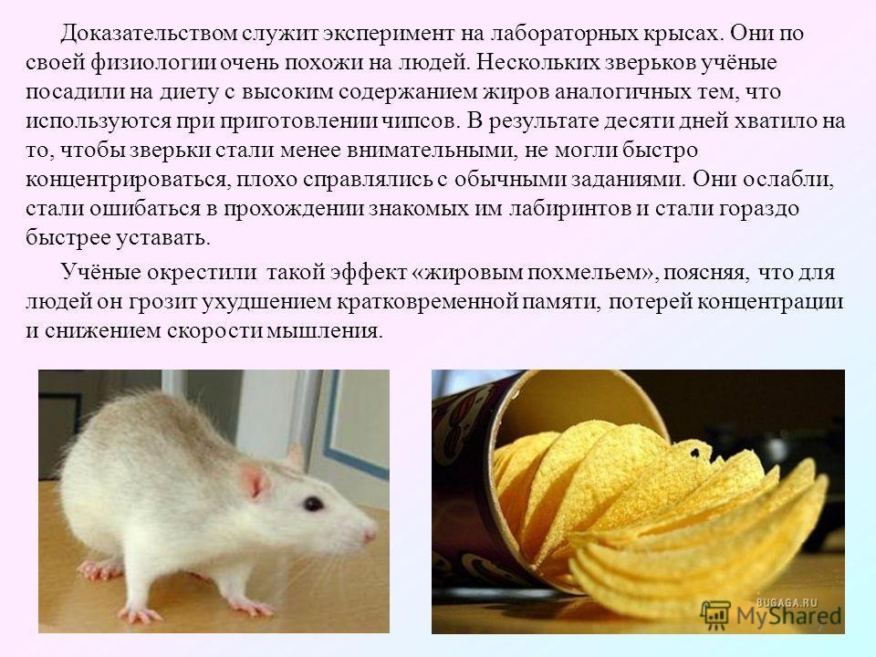 Доказательством служит эксперимент на лабораторных крысах. Они по своей физиологии очень похожи на людей. Нескольких зверьков учёные посадили на диету с высоким содержанием жиров аналогичных тем, что используются при приготовлении чипсов. В результат