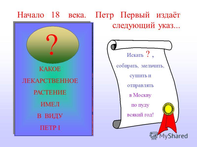 Петр Первый издаёт следующий указ... Искать ?, собирать, мельчить, сушить и отправлять в Москву по пуду всякий год! КАКОЕ ЛЕКАРСТВЕННОЕ РАСТЕНИЕ ИМЕЛ В ВИДУ ПЕТР I Начало 18 века.