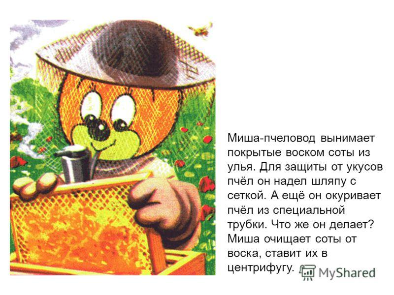 Миша-пчеловод вынимает покрытые воском соты из улья. Для защиты от укусов пчёл он надел шляпу с сеткой. А ещё он окуривает пчёл из специальной трубки. Что же он делает? Миша очищает соты от воска, ставит их в центрифугу.