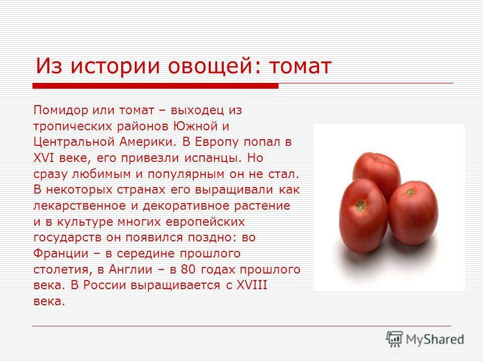 Из истории овощей: томат Помидор или томат – выходец из тропических районов Южной и Центральной Америки. В Европу попал в XVI веке, его привезли испанцы. Но сразу любимым и популярным он не стал. В некоторых странах его выращивали как лекарственное и