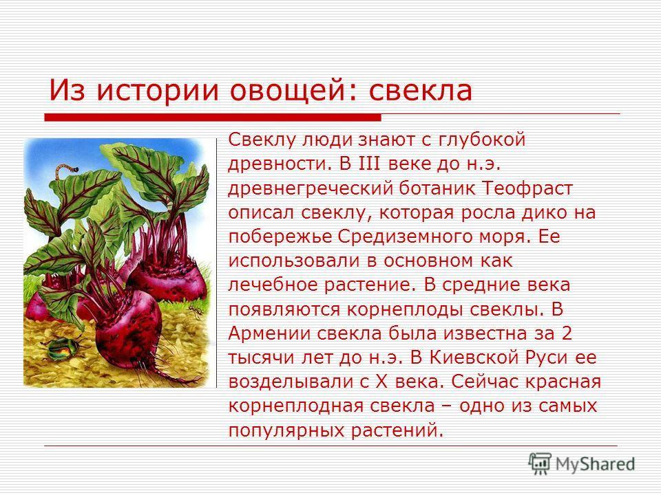 Из истории овощей: свекла Свеклу люди знают с глубокой древности. В III веке до н.э. древнегреческий ботаник Теофраст описал свеклу, которая росла дико на побережье Средиземного моря. Ее использовали в основном как лечебное растение. В средние века п