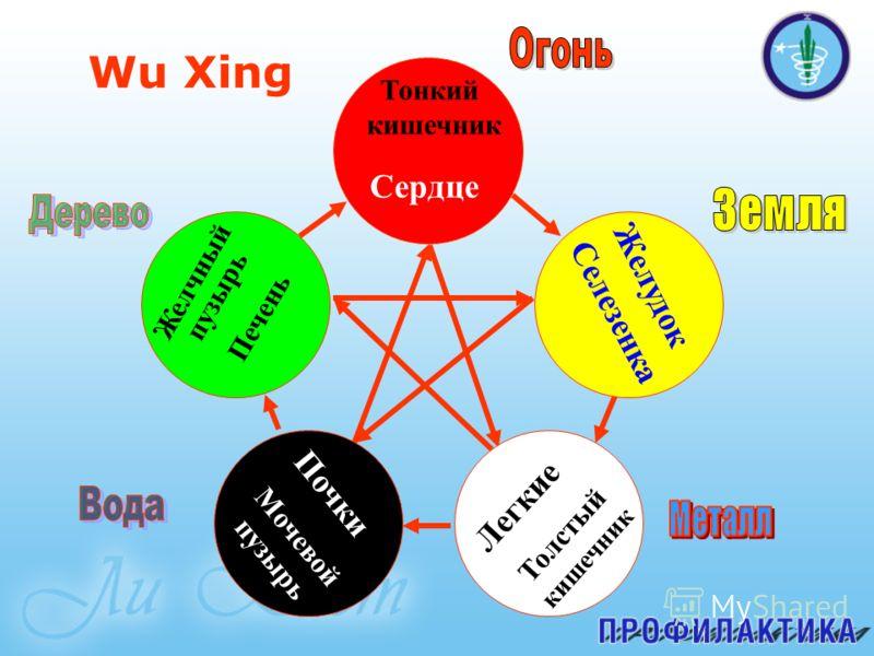 Wu Xing Сердце Печень Почки Легкие Селезенка Мочевой пузырь Толстый кишечник Желудок Тонкий кишечник Желчный пузырь