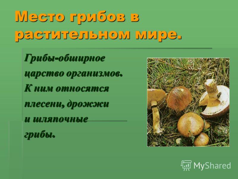 Место грибов в растительном мире. Грибы - обширное царство организмов. К ним относятся плесени, дрожжи и шляпочные грибы.
