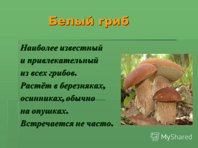 Белый гриб Белый гриб Наиболее известный и привлекательный из всех грибов. Растёт в березняках, осинниках, обычно на опушках. Встречается не часто.