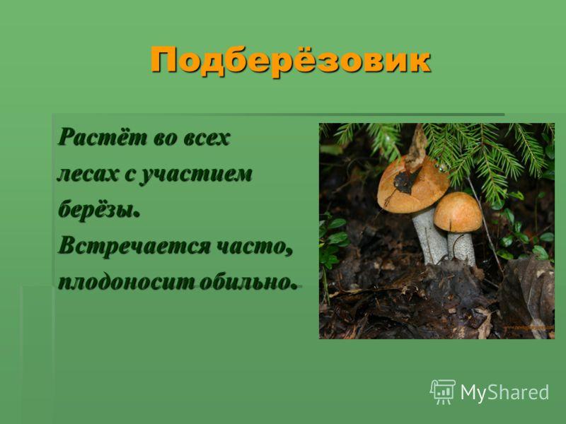 Подберёзовик Подберёзовик Растёт во всех лесах с участием берёзы. Встречается часто, плодоносит обильно.