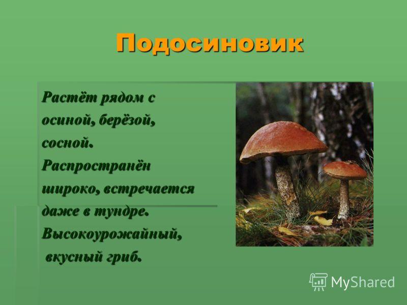 Подосиновик Подосиновик Растёт рядом с осиной, берёзой, сосной. Распространён широко, встречается даже в тундре. Высокоурожайный, вкусный гриб. вкусный гриб.