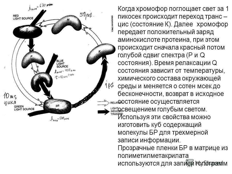 Когда хромофор поглощает свет за 1 пикосек происходит переход транс – цис (состояние К). Далее хромофор передает положительный заряд аминокислоте протеина, при этом происходит сначала красный потом голубой сдвиг спектра (Р и Q состояния). Время релак