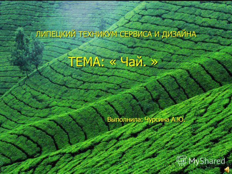 ЛИПЕЦКИЙ ТЕХНИКУМ СЕРВИСА И ДИЗАЙНА ТЕМА: « Чай. » Выполнила: Чурсина А.Ю.