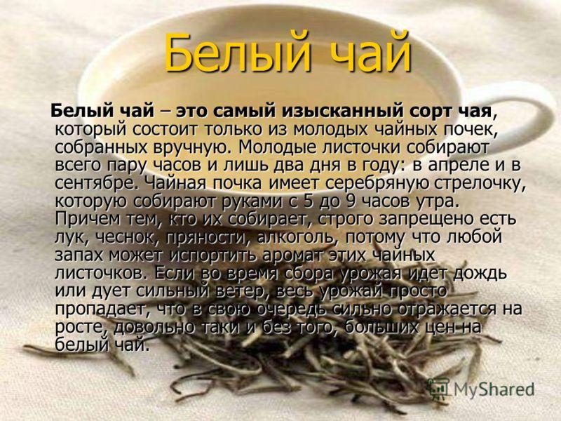 Белый чай Белый чай Белый чай – это самый изысканный сорт чая, который состоит только из молодых чайных почек, собранных вручную. Молодые листочки собирают всего пару часов и лишь два дня в году: в апреле и в сентябре. Чайная почка имеет серебряную с