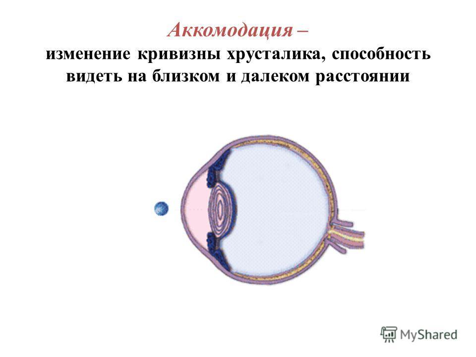 Аккомодация – изменение кривизны хрусталика, способность видеть на близком и далеком расстоянии