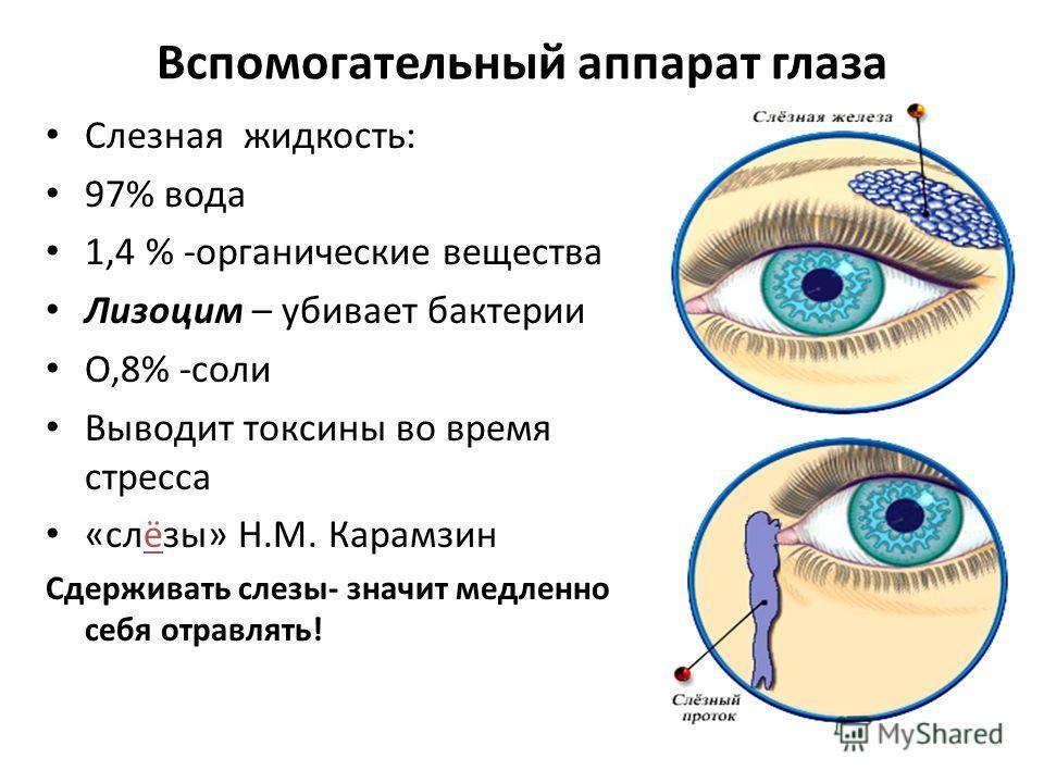 Вспомогательный аппарат глаза Слезная жидкость: 97% вода 1,4 % -органические вещества Лизоцим – убивает бактерии О,8% -соли Выводит токсины во время стресса «слёзы» Н.М. Карамзин Сдерживать слезы- значит медленно себя отравлять!