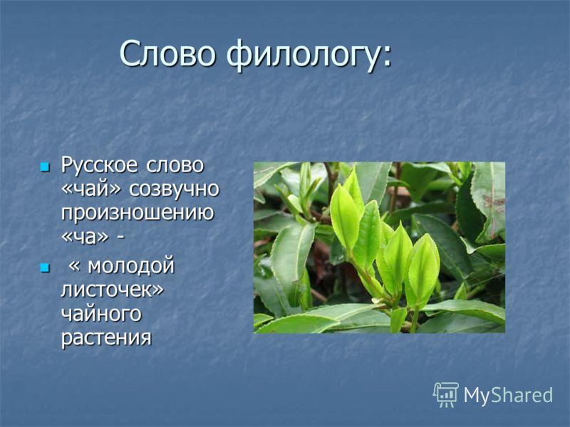 Слово филологу: Русское слово «чай» созвучно произношению «ча» - Русское слово «чай» созвучно произношению «ча» - « молодой листочек» чайного растения « молодой листочек» чайного растения