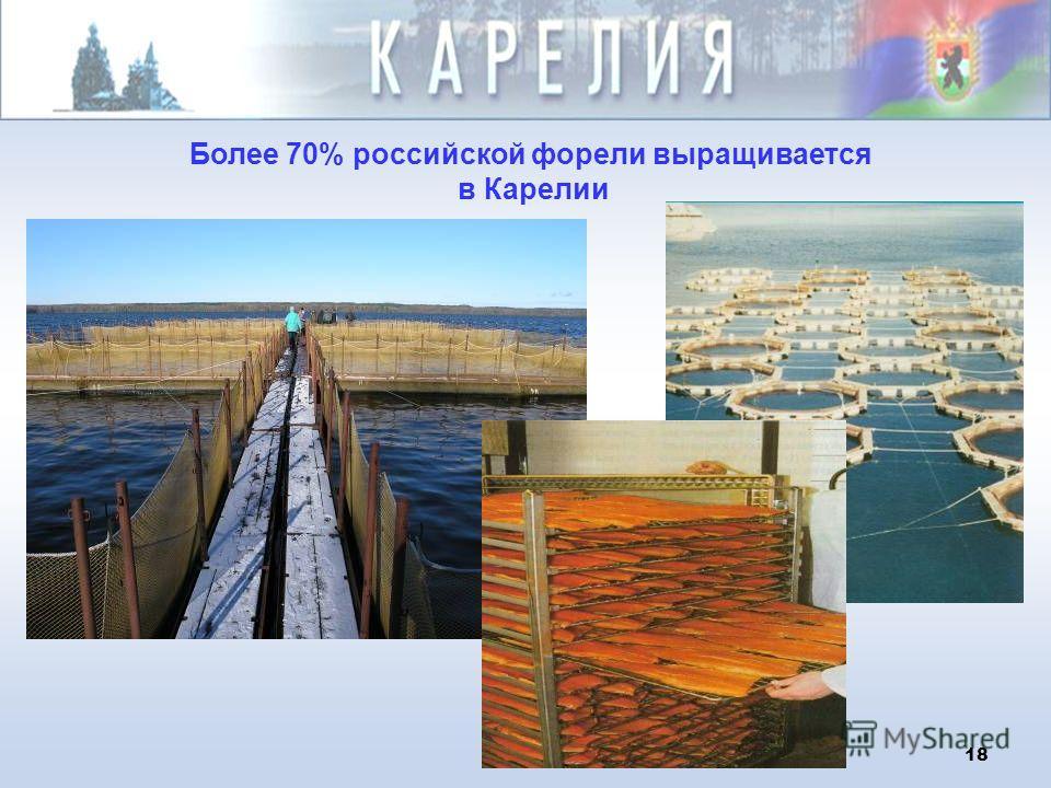 18 Более 70% российской форели выращивается в Карелии